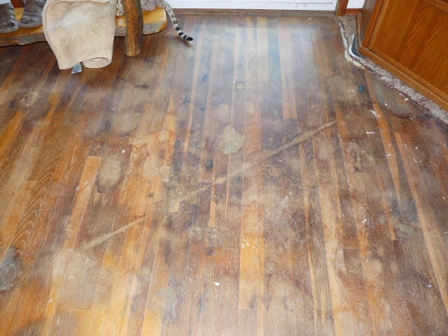 Women can fix it how to clean old hardwood floors for Wood floor under carpet