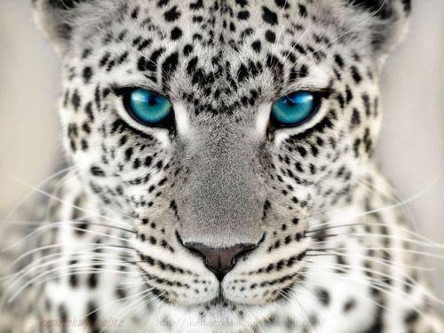 White Cheetahs Wild Life Adventures