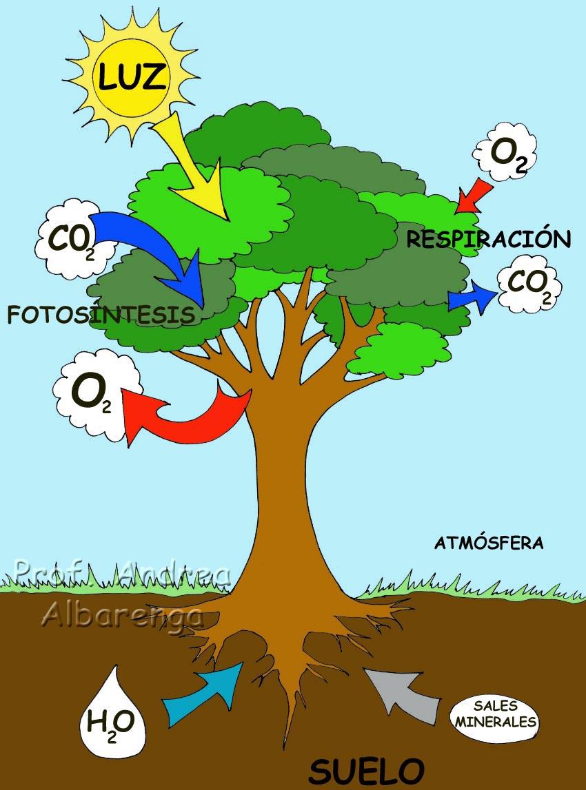 , que interactúa con el suelo, la atmósfera y la radiación solar