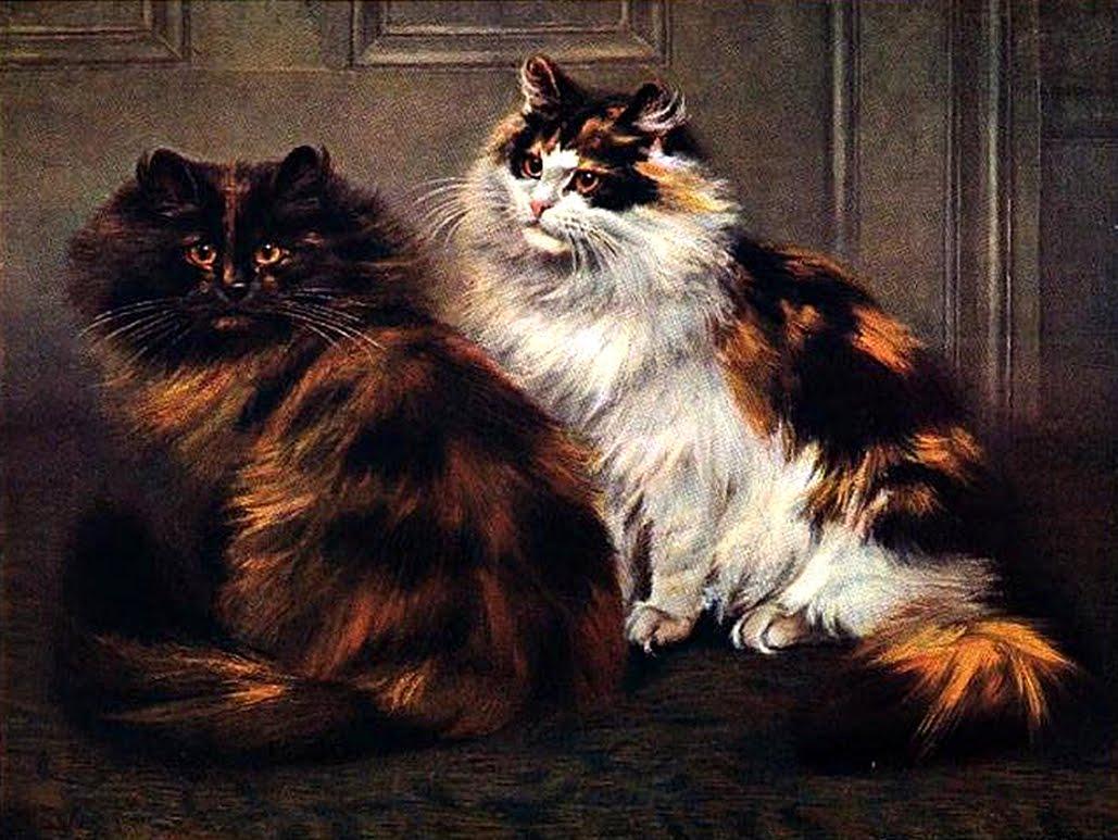 Tortoiseshell Persian Cats
