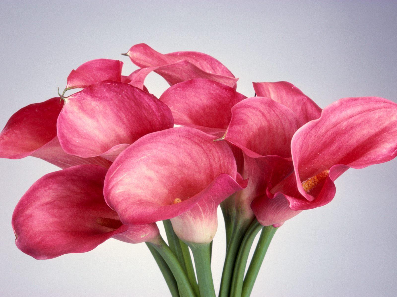 Imagenes Que Se Mueven De Flores - Imagenes Que Se Mueven Y Brillan Bonitas Para Fondos