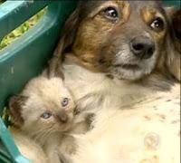 Cadela Tequila e filhote de gatinho
