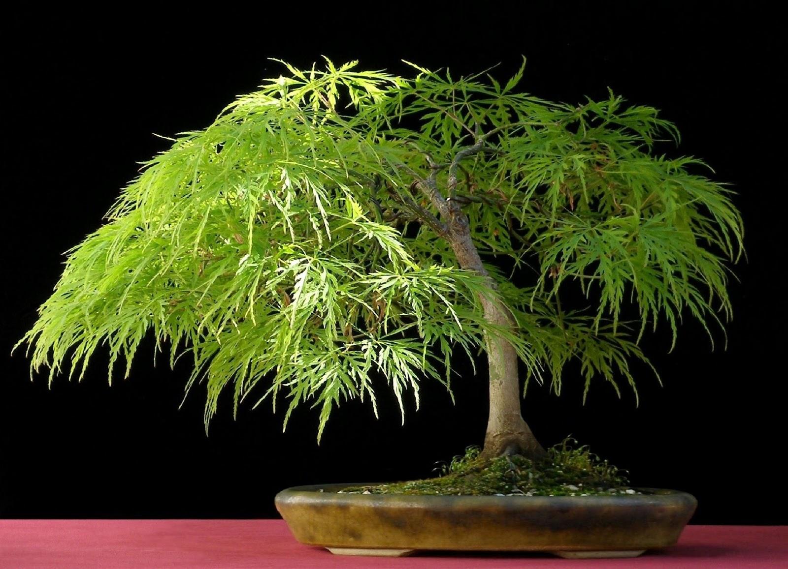 Gli alberi pi belli del mondo i luoghi pi belli del mondo - I mobili piu belli del mondo ...