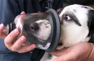 Hỗ trợ hô hấp cho cún