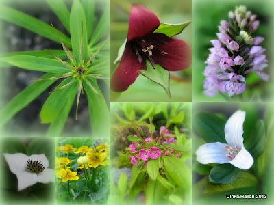 Woodland, trädgårdslund