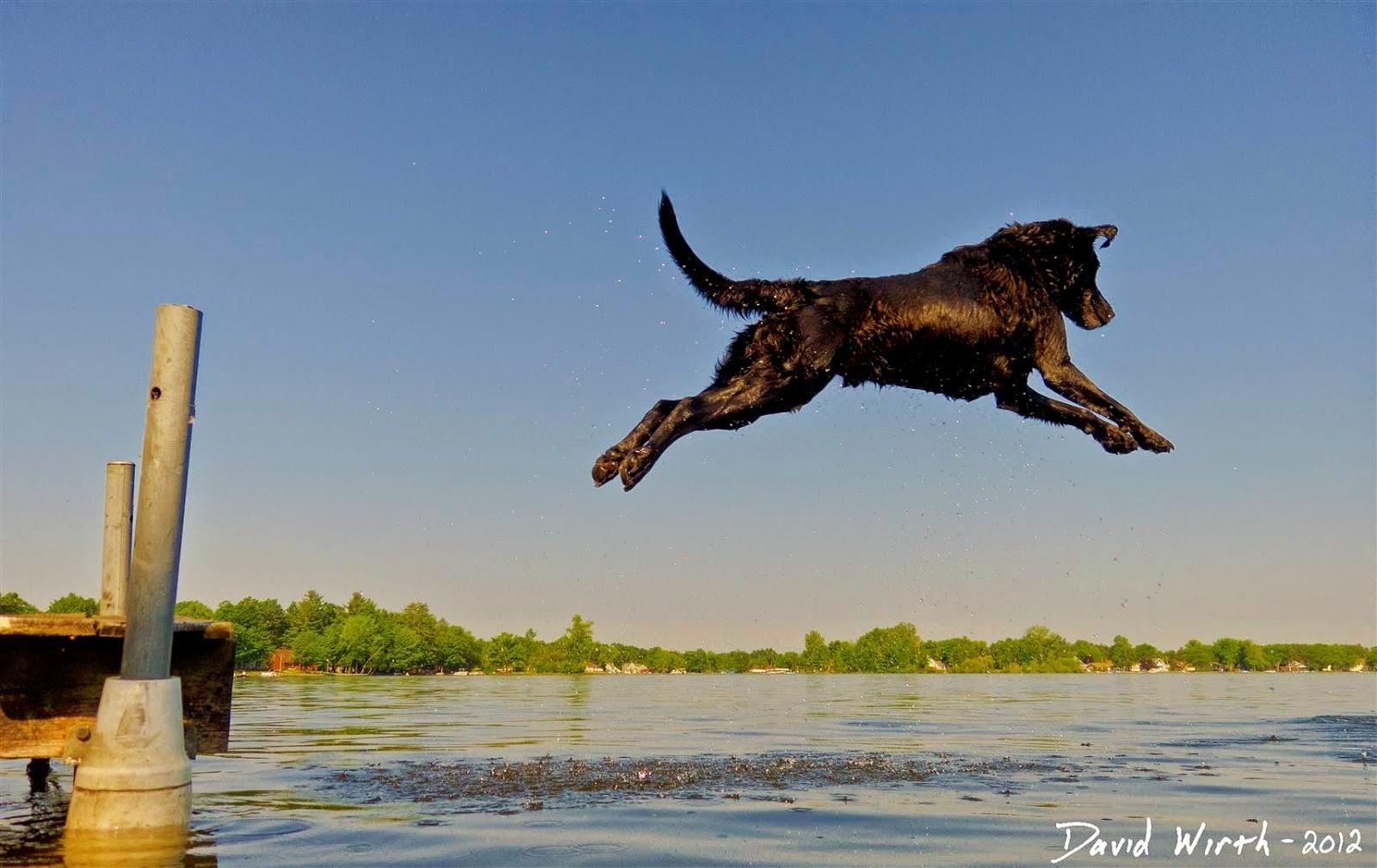 dog dock jump