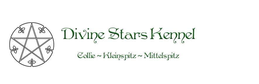 Divine Stars Kennel