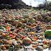 Για βιολογική καταστροφή στις χωματερές τα φρούτα και ψίχουλα για αποζημίωση οι αγρότες.