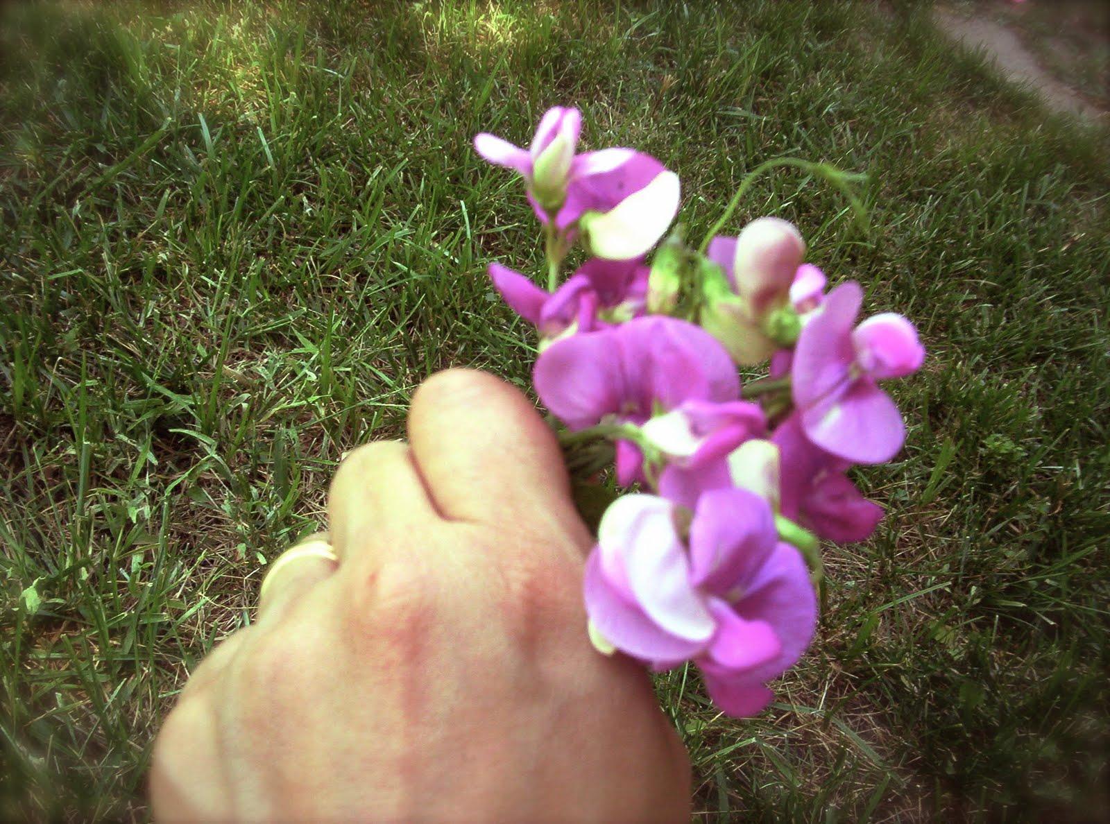 http://3.bp.blogspot.com/-NcMFyk1OMII/THNRz3lTKEI/AAAAAAAAArc/u6_ieRn-Dek/s1600/peabouquet.jpg