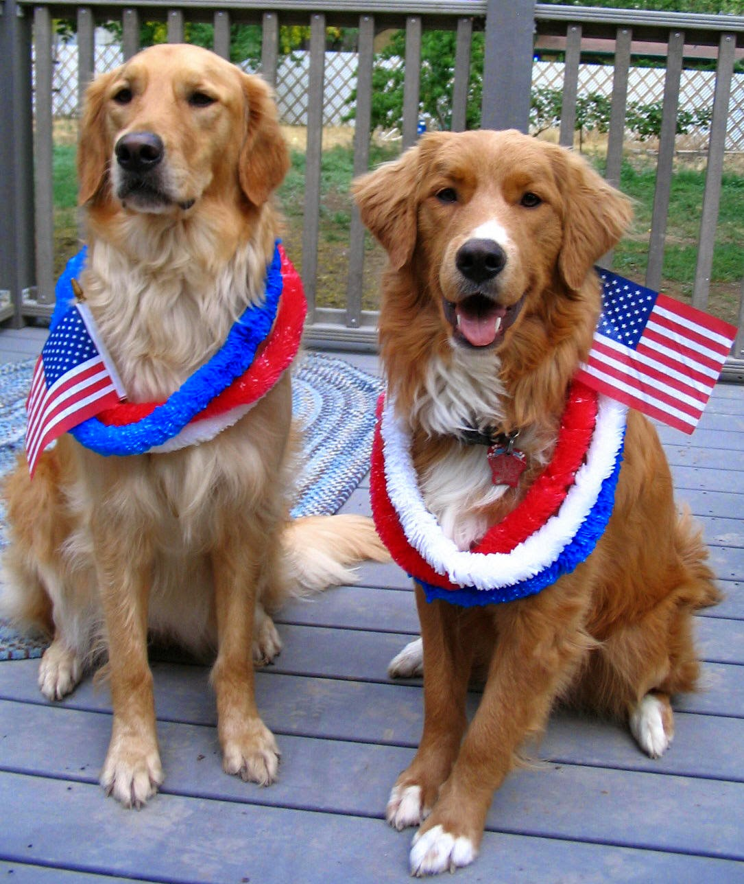 4th+july+independence+day+funny+dog+pictures+with+us+flag