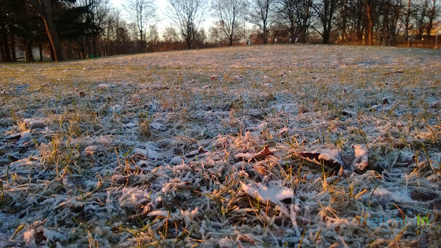 frozen ground in the morning