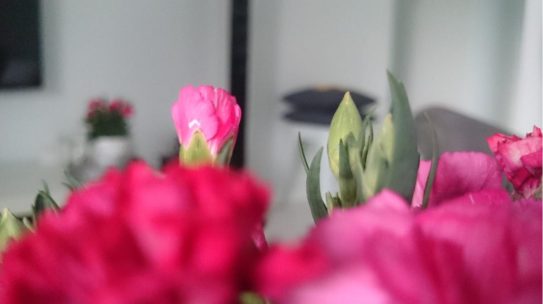 Różowe goździki