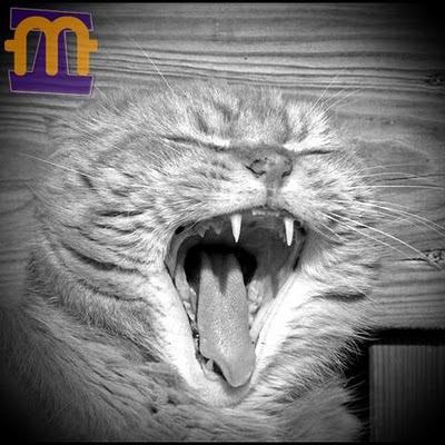 Por quê gato dorme tanto?