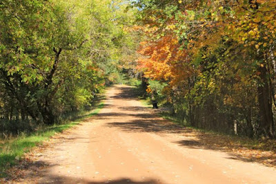Autumn sunshine warming a country road