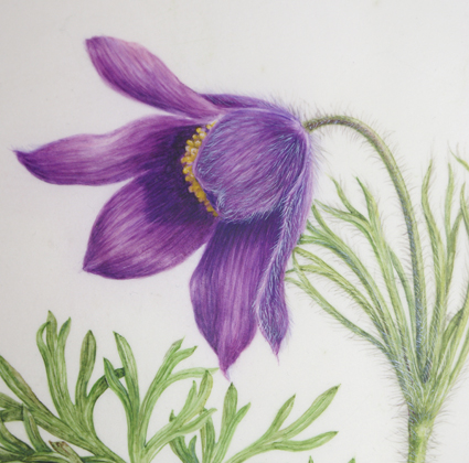 Painting using body colour to add fine hair to Pulsatilla flower