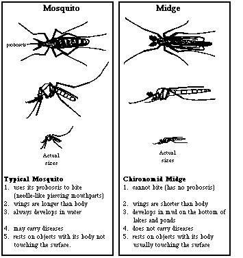 Yếu tố trung gian truyền lây bệnh là loài muỗi và các loại côn trùng hút máu