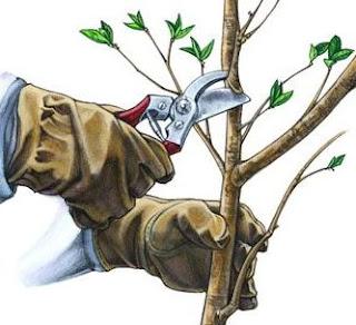 poda, trasplante, árboles, arbustos