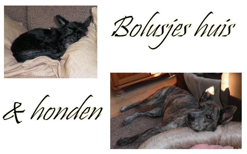 Bolusjes huis en honden