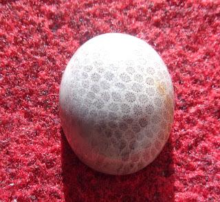 Batu Bertuah, Benda Mustika Asli, Mustika fosil sarang Tawon