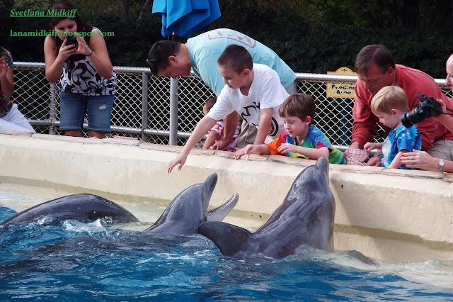 Every time we visited the park «Sea World», children can not be torn away from the Dolphins. Today I found these photos and decided to gather in one album. I think it would be interesting to see how all the dolphins play with the children.  Каждый раз, когда мы посещали парк «Sea World», детей не возможно было оторвать от дельфинов. Сегодня я нашла эти фото и решила собрать в один альбом. Думаю, что будет всем интересно посмотреть как дельфины играют с детьми.