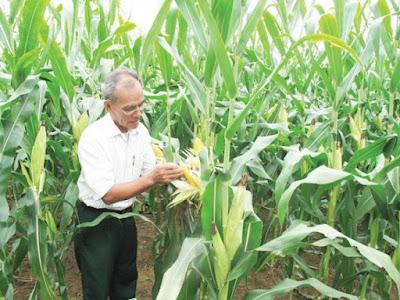 Việt Nam còn nhập khẩu nguyên liệu thức ăn chăn nuôi dài dài