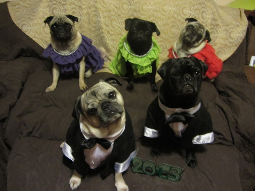 A Day in the Life of Pugs
