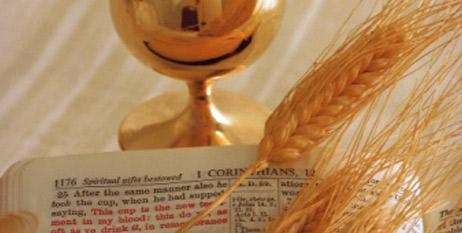 Guadalupe En Familia: Mayo, tiempo de la Primera Comunión