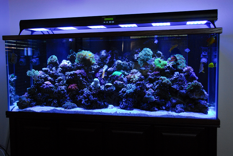 Pets saltwater aquarium set up for Fish tank lighting