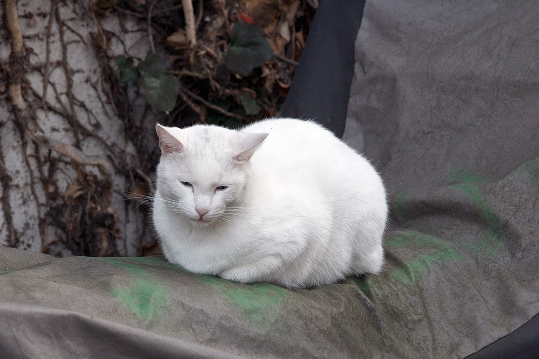 white cat sitting on motorcycle