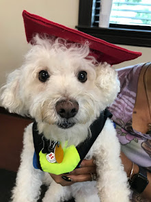 Arnie graduates from dog therapy