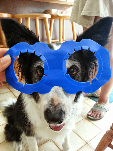 SuperDog // Zoe with a Super Hero Mask