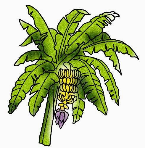 Gambar Pohon Pisang Kartun Lucu Banana Tree Cartoon Pictures Wallpaper