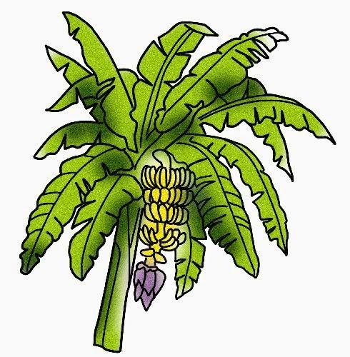 Gambar Pohon Pisang Kartun Lucu Banana Tree Cartoon Pictures Wallpaper