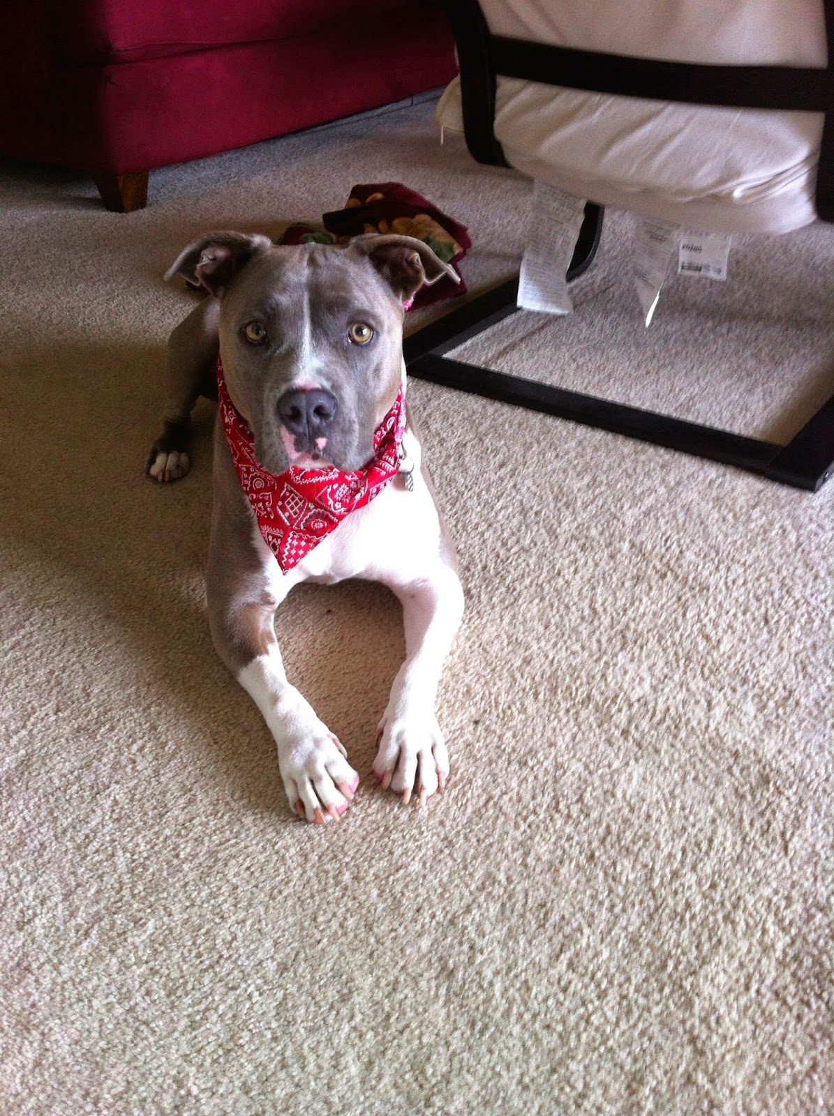 musings of a menopausal melon mmm quilts pit bull love