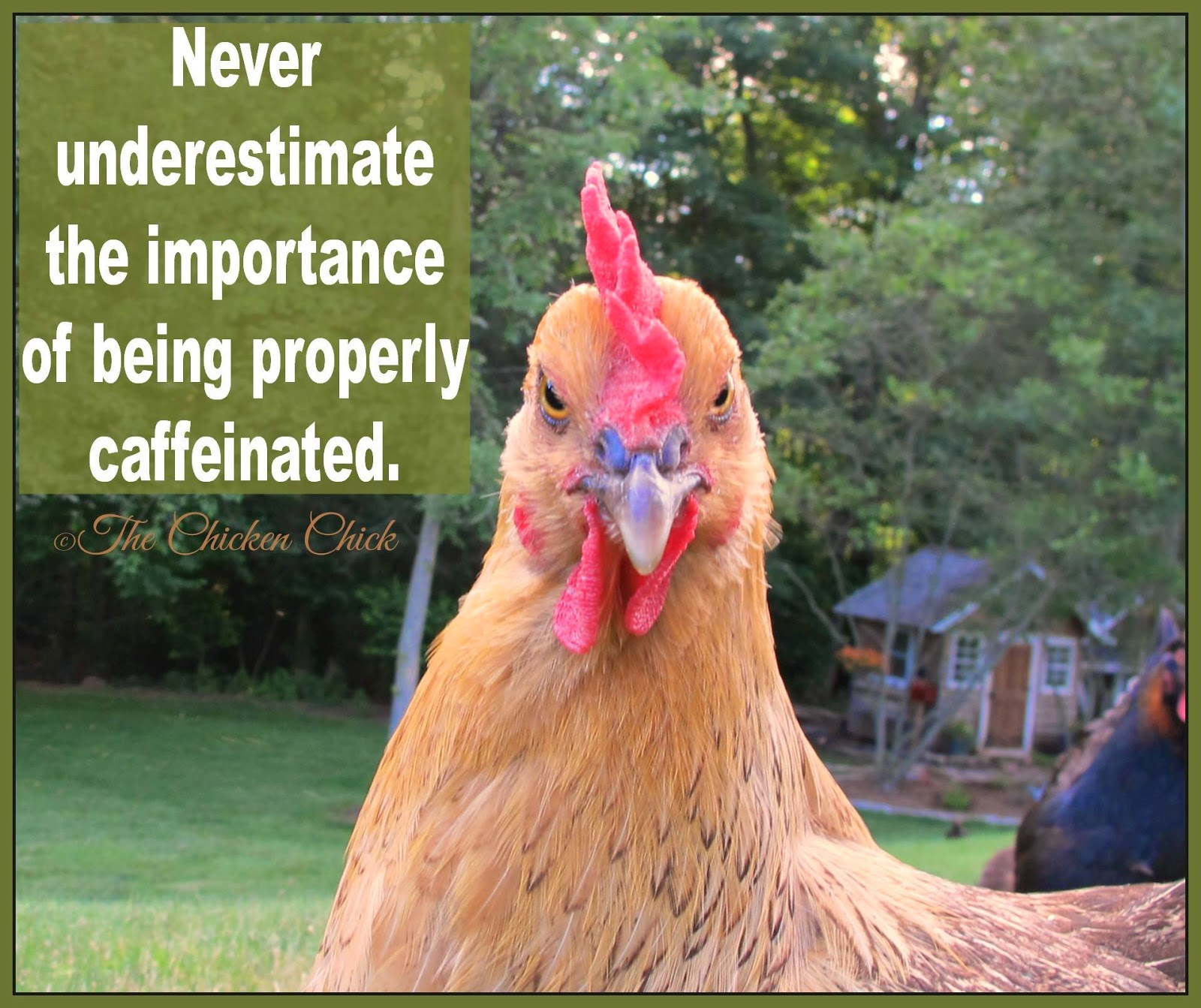 Never underestimate the importance of being properly caffeinated.