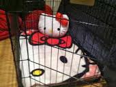 Lugarzinho pra kitty descansar