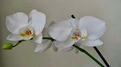 Nowe kwiaty