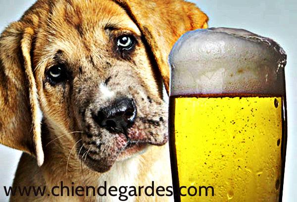 conseil vétérinaire