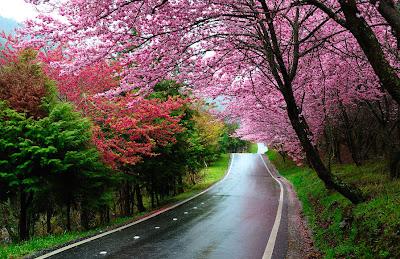 Los colores del otoño en Japón - Autumn colors in Japan
