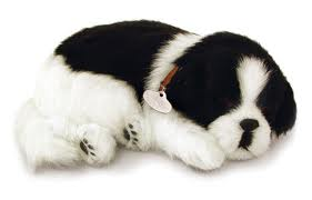 Part-Border Collies puppy