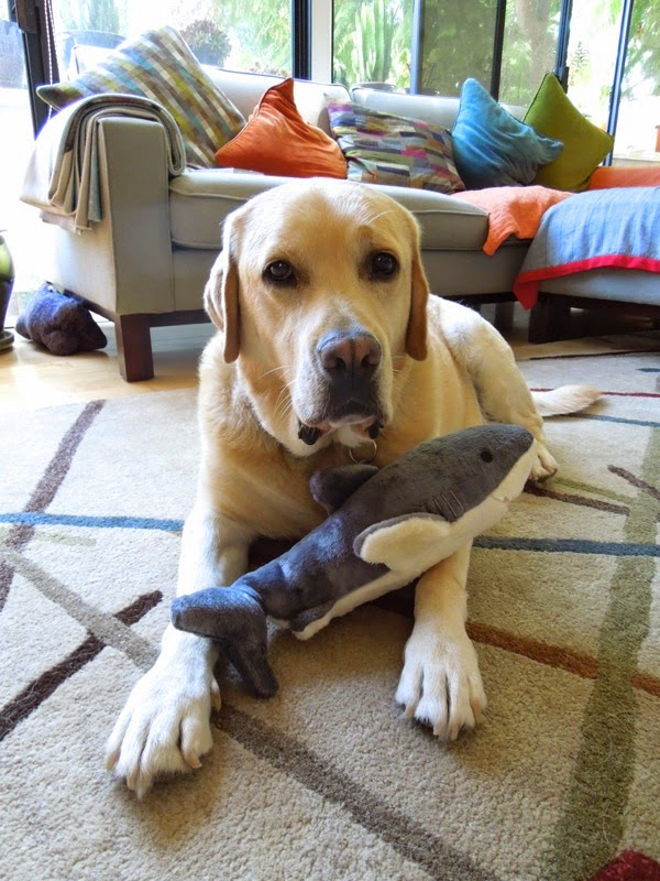 Labrador shark toy