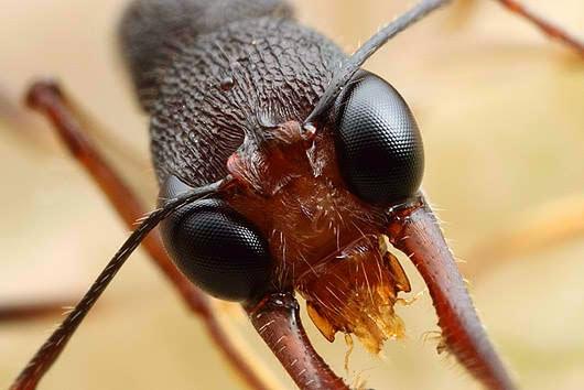 Ant's eyes