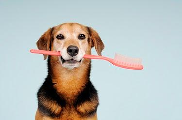 Cuida los dientes de tu mascota