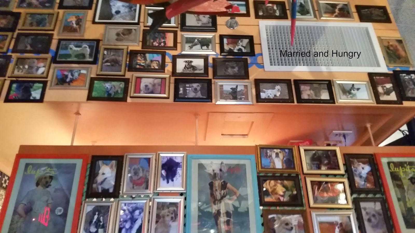 Dog wall Chuy's North Little Rock, partnered with humane society to get pets adopted