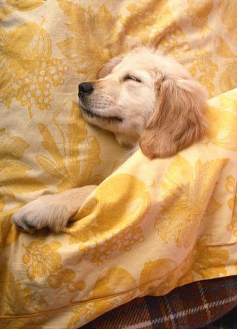 Dog Watches Owners Sleep