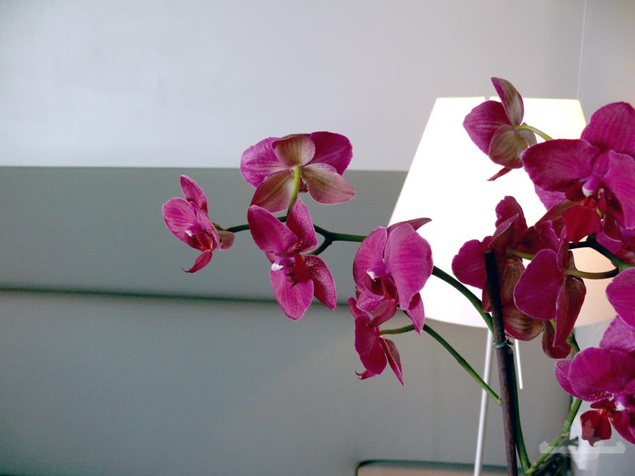 Discover Sofitel Vienna Stephansdom graue Suite Orchidee