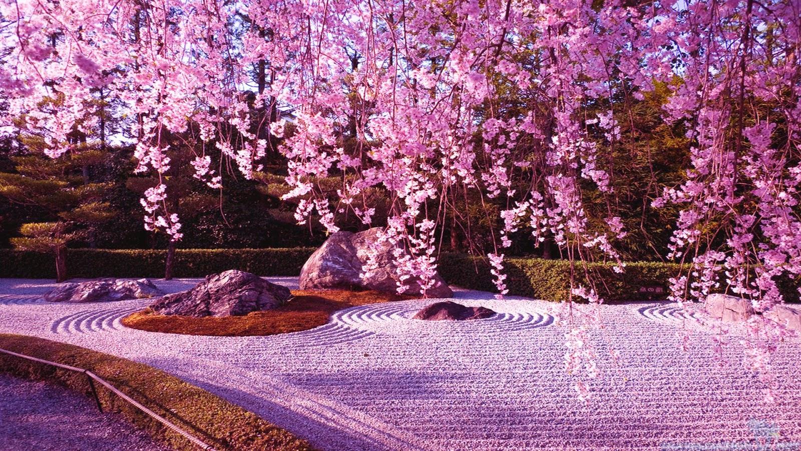 japanese cherry blossom wallpaper