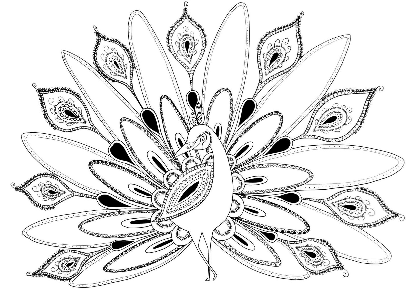 Line Drawing Of Peacock : Peacock coloring pages for kids