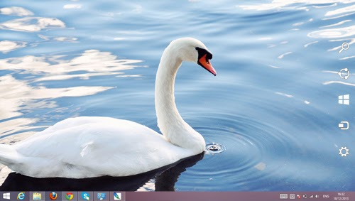 Swan Animal Theme For Windows 7 And 8 8.1 9