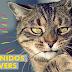 Canción del Comercial de Master Cat